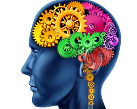 systeme neuro vegetatif